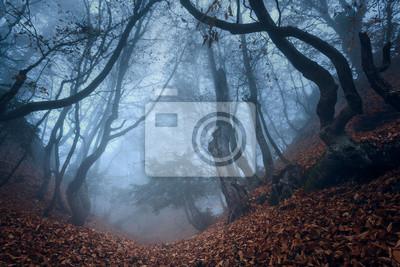 Jesień w lesie Krymu