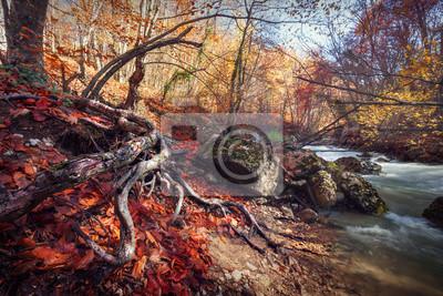 Jesień wschód słońca w pięknym lesie nad rzeką