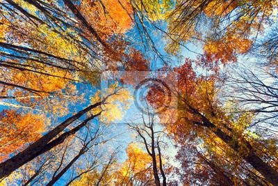 Jesienią lasów na Krymie
