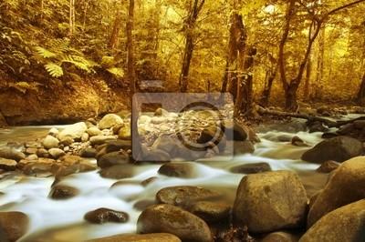 Jesienią lasu z górskich rzek