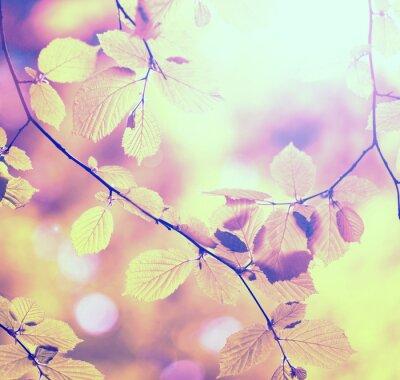 Obraz Jesienne drzewa liści retro