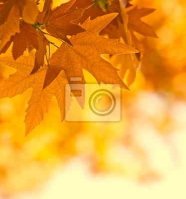 jesienne liście, bardzo płytkie fokus