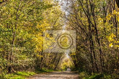 Jesienny las z żółtymi liśćmi