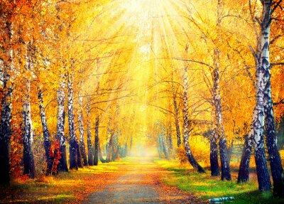 Obraz Jesienny Park. Jesienne drzewa i liści w promieniach słońca