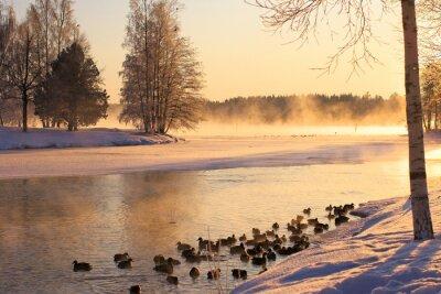 Obraz Kaczki na jeziorze zimą