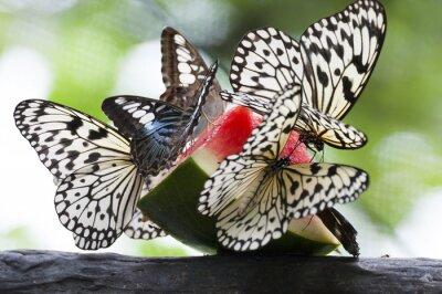 Obraz karmienie motyl w zielony dom