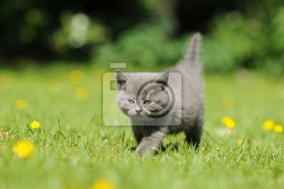 Obraz Katzenkind