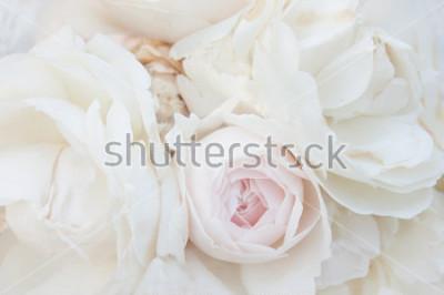 Obraz Kilka białych róż makro