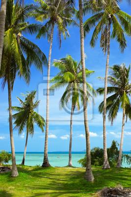 Obraz Kokosowe palmy na tropikalnej wyspie