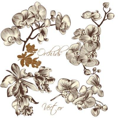 Obraz Kolekcja wysokiej szczegółowe wektor kwiatów orchidei