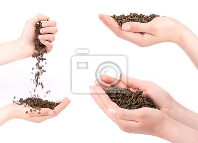 Kolekcja z rąk gospodarstwa herbaty samodzielnie na biały