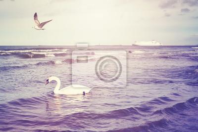 Kolor stonowanych łabędź na wodzie i prom na odległość, wakacje podróży koncepcji, selektywne focus.