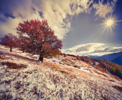 Obraz Kolorowa jesień krajobraz w górach.