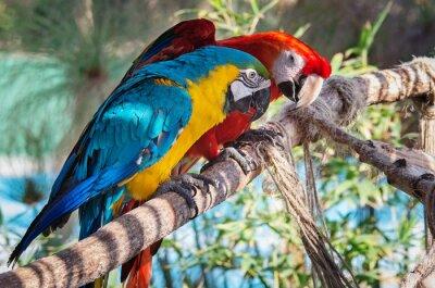 Obraz Kolorowe ary