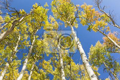Kolorowe Aspen pozostawia przeciw błękitne niebo