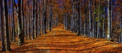 Obraz Kolorowe jesienne drzewa