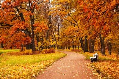 Obraz kolorowe jesienne drzewa w parku