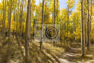 Kolorowe Kenosha Przełęcz Trail