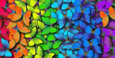 Obraz Kolory tęczy. Wzór stubarwny motyla morpho, tekstury tło.