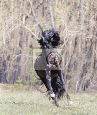 Obraz Koń