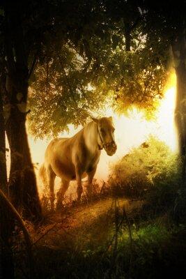 Obraz Koń bajki