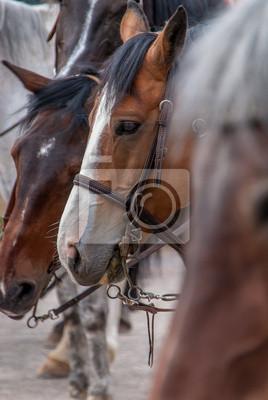 Koń głowy