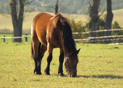 Obraz Koń na łące