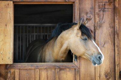 Obraz Koń w stajni