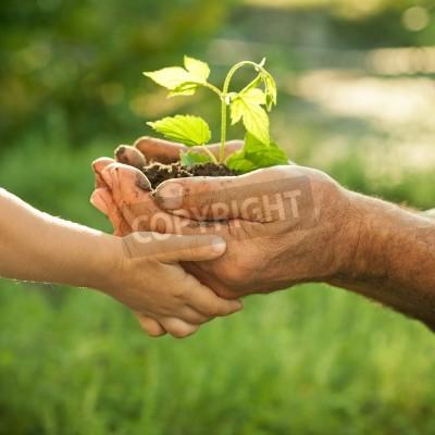 Obraz Koncepcja ekologii