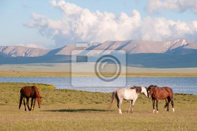 Konie na TLE Gór i Jeziora Songköl.