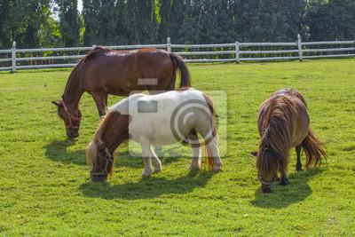 konie na zielonej trawie