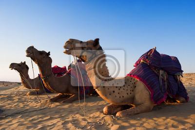 Konna wielbłąd na działalność w Indiach