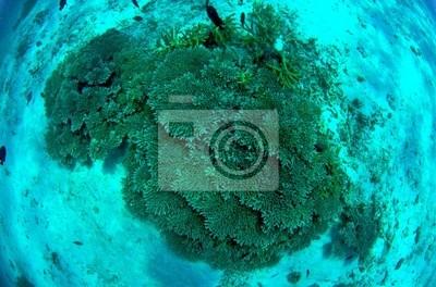 Koral, Park Narodowy Similan, Tajlandia