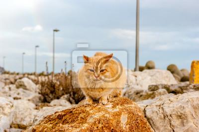 Kot brązowego koloru na skale w porcie morskim w Sesimbra (Portugalia) podczas deszczowy dzień
