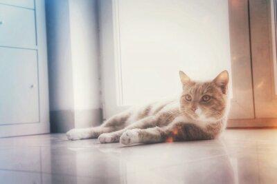 Obraz Kot na podłodze z efektami świetlnymi