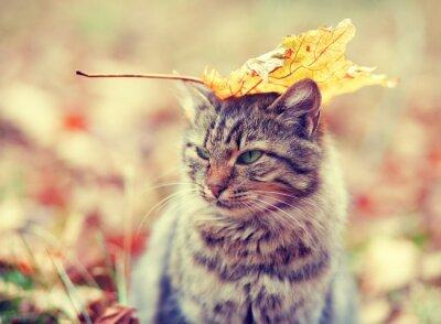 Obraz Kot syberyjski siedzi w lesie jesienią