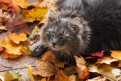 Obraz Kot w jesieni