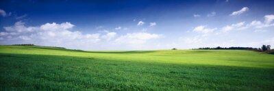 Obraz krajobraz lato rosja - fileds zielone ,błękitne niebo i białe c