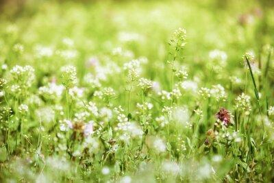 Obraz krajobraz lato, zielona łąka z kwiatami