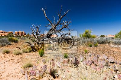 Krajobraz pustyni