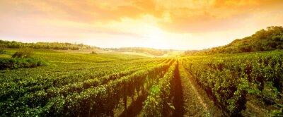 Obraz krajobraz winnicy