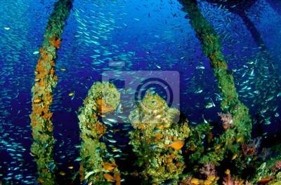 Król Cruiser Wreck, PP Island, Tajlandia