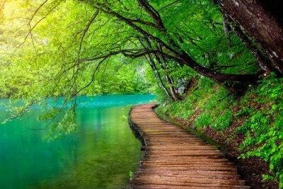 Obraz Krystalicznie czysta woda i drewniana ścieżka. Jeziora Plitwickie, Chorwacja