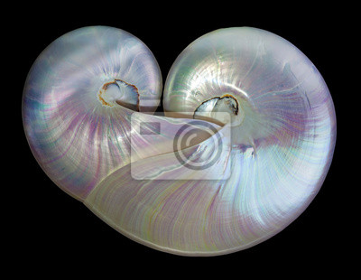Obraz Kształt serca perła muszle nautilus.