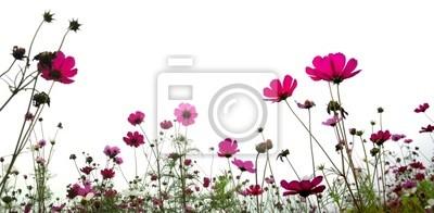 Kwiat (Forest of Flowers)