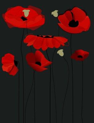 Obraz Kwiat kwiaty maku na czarnym tle