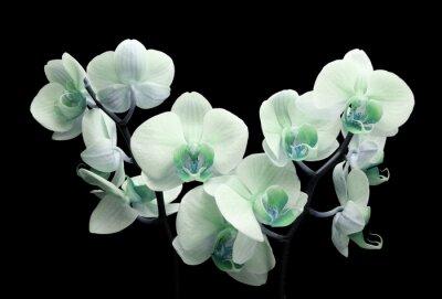 Obraz kwiat orchidei