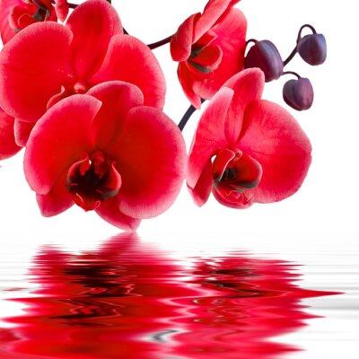 Obraz kwiat orchidei w zbliżenie z odbicia w wodzie