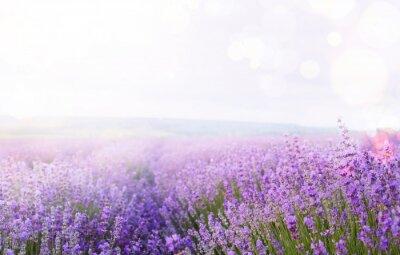 Obraz Kwiat pole i niebo.