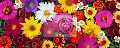 Obraz Kwiat tło, widok z góry. Pocztówka, tło za gratulacje.